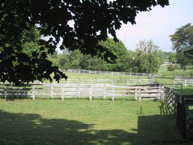 Fences and Pasture