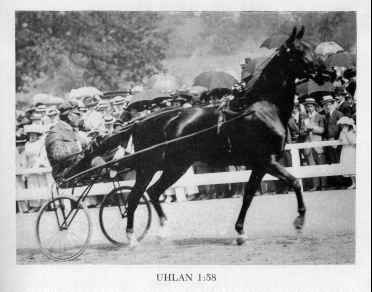 The horse Uhlan