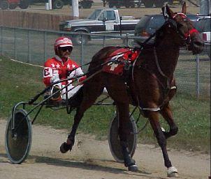 The horse Ima Cricket