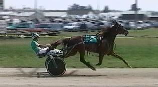 Horse Dunkster